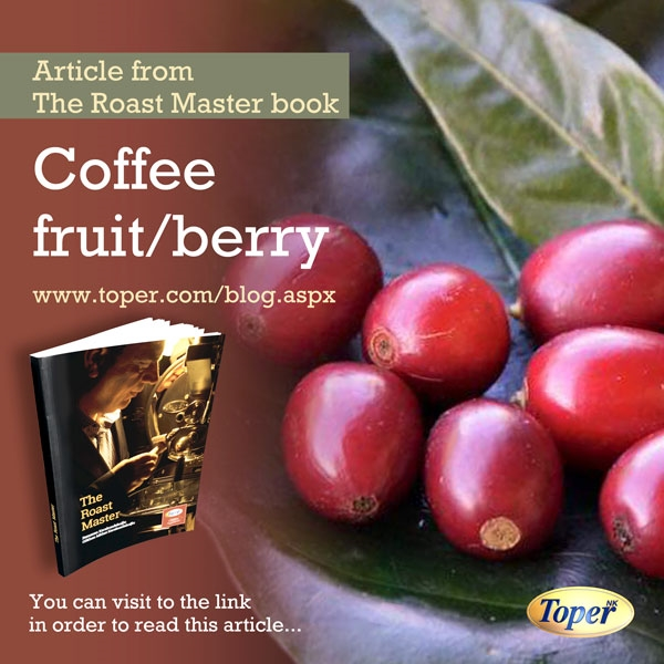 coffee bean fruit berry