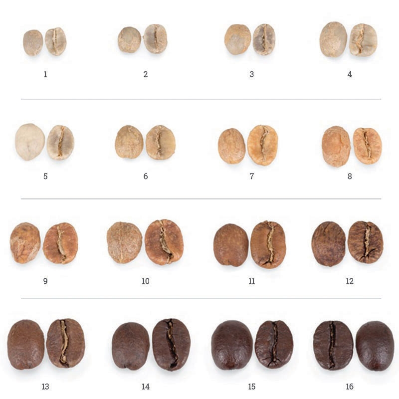 Phases of coffee roasting from The Roast Master Book