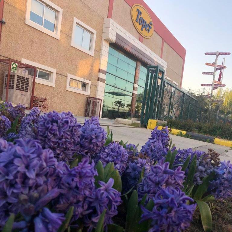 탑 로스터스 공장 꽃